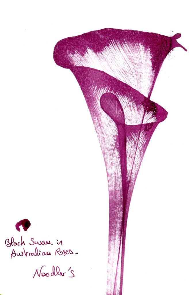 Black Swan in Australian Roses Feelink 2 Noodlers